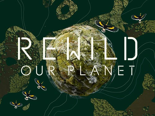 Rewild Our Planet
